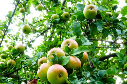Angebote aus Garten und Küche